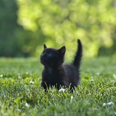gato negro jardin
