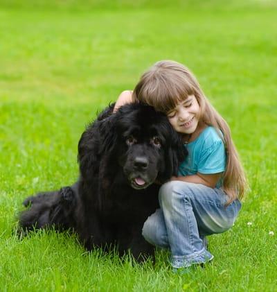 bambina-sul-prato-con-cane-terranova