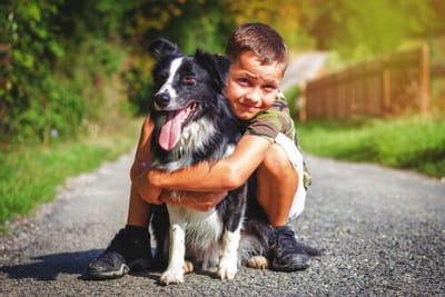 bambino-abbraccia-border-collie