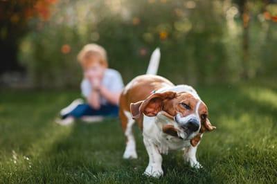 Basset-hound-con-bambino-dietro