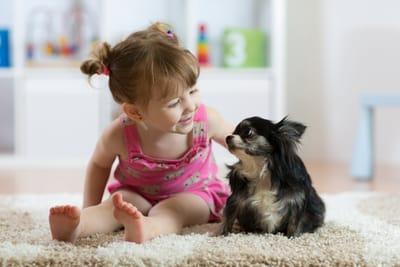 chihuahua-con-bambina