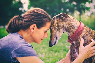 greyhound-di-fronte-a-donna