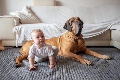 neonata-con-cane-fila-brasileiro