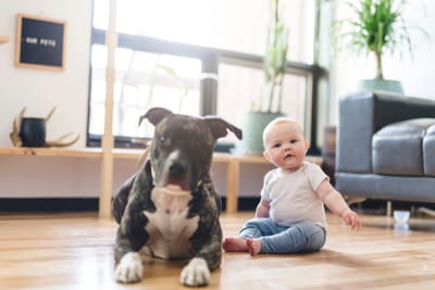 pitbull-con-neonata-a-terra