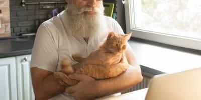 gatto rosso affettuoso con cane