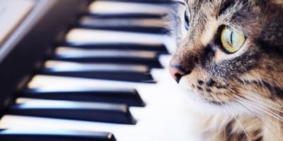 gatto-e-pianoforte