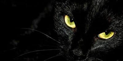 gatto-nero-con-occhi-gialli