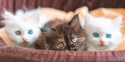 tre-gattini-in-una-cesta