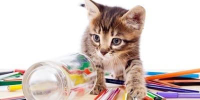 gattino su tavolo con matite colorate