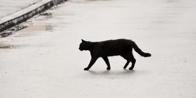 gatto nero attraversa la strada