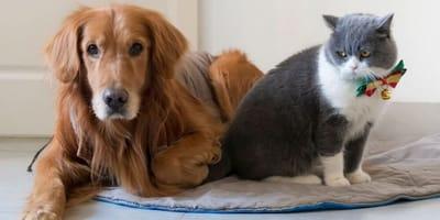 cane marrone e gatto bianco e grigio sul tappeto