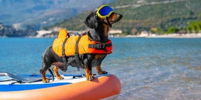 Bassotto-sul-paddle