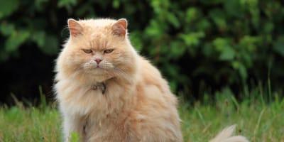 gatto-rosso-indipendente-e-deciso