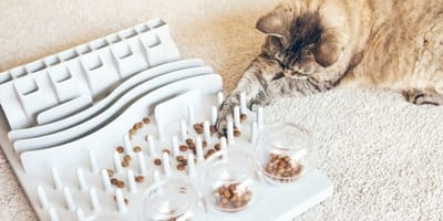 gatto-intelligente-gioca-con-dispenser-ludico-di-croccantini
