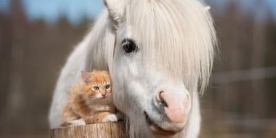 gattino-rosso-e-poney-bianco