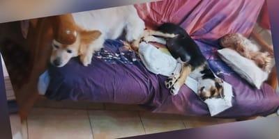 4-il-trio-sul-divano.jpg