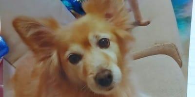 8-maya-cagnolina-marrone-sul-divano.jpg