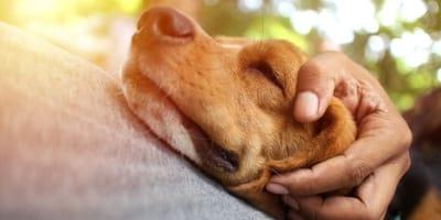 cane-dorme-sulla-pancia-del-padrone.jpg