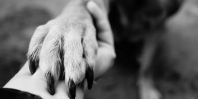 zampa-di-un-cane-in-una-mano-femminile.jpg