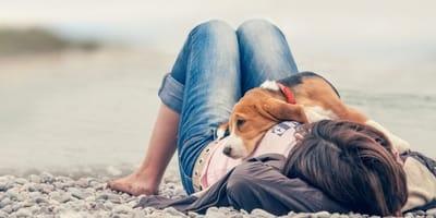 cane-beagle-disteso-su-una-ragazza.jpg