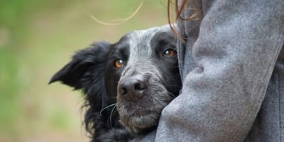 cane-nero-e-grigio-tra-le-braccia-di-una-ragazza.jpg