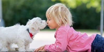 cane-maltese-bacia-un-bambino