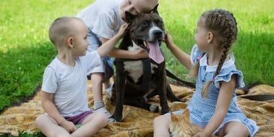 amstaff e picnic con bambini