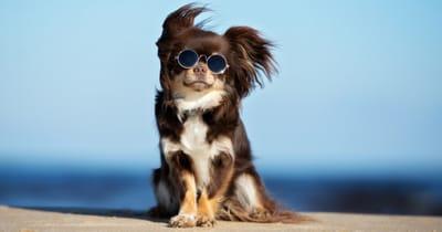 gafas de sol proteccion ojos perro