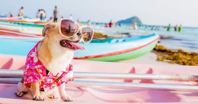 poner gafas de sol perros