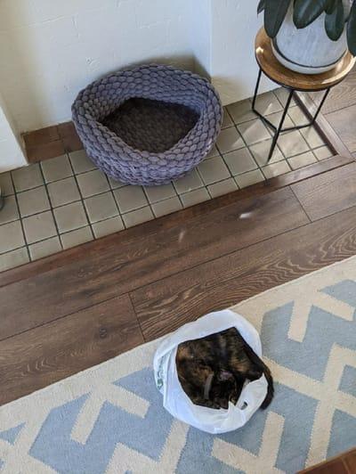 gato descansa en una bolsa de plastico