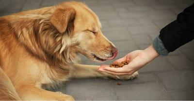 mujer alimenta perro callejero