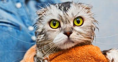 gato mojado baño