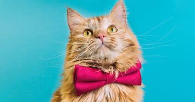 gato obediente