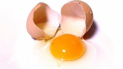 gatos pueden comer huevos crudos