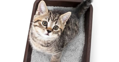 arena de sepiolita gato