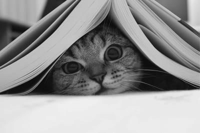 gato bajo un libro