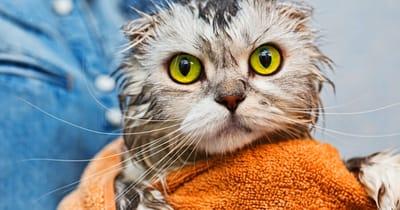 gato tiene miedo al agua