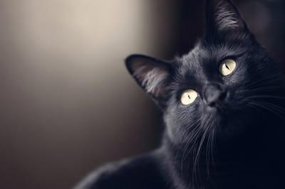 gato negro cara triste
