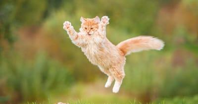 gato saltando muy alto