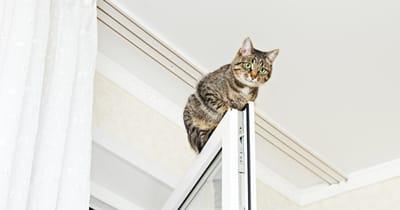 gatos escalan puertas