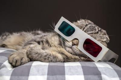 gato con gafas 3d