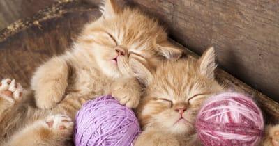 lana gatos juego
