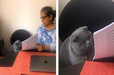 dia del trabajo meme gato lee apuntes