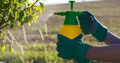 pesticidas gatos peligro