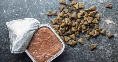 comida seca y comida humeda gatos