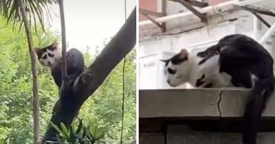 gato mirada triste viral