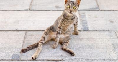 gato anorexico