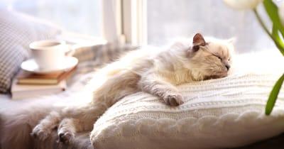 gato duerme sofa