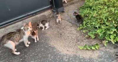gatos desamparados
