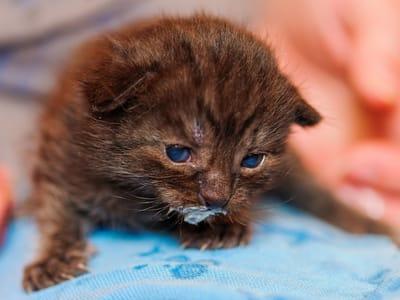 gatito bebe toma leche